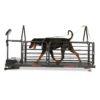 Dog-Runner_OrthoPro_full_action